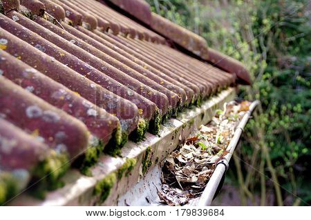 Dirty roof with dense moss and gutter with leaves requiring cleaning
