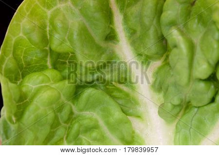 Closeup of a green crisp lettuce leaf with a black background and space for text.