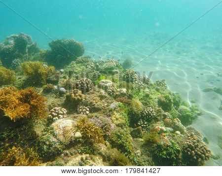 Coral reef and sea plants on sea bottom. Young coral formation on sand seabottom. Coral reef underwater photo. Snorkeling or diving banner template with text place. Summer holiday sport in seashore