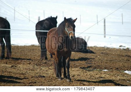 horses looking  fence pen  hay  riding hoofs