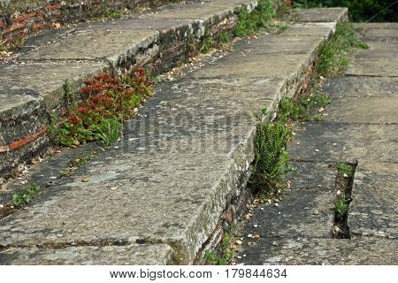 Old stone steps with clay tiles set into the risers. With cracks. Lichens and plants growing on them.