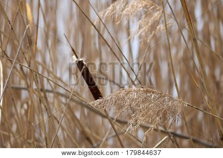 Cat Tails and Pampas Grass Blowing in Wind