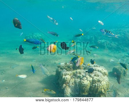 Underwater landscape with tropical fish. Young coral formation and coral fish shoal. Butterfly fish thalassoma surgeonfish. Aquarium fishes in wild nature. Exotic island seashore. Undersea photo