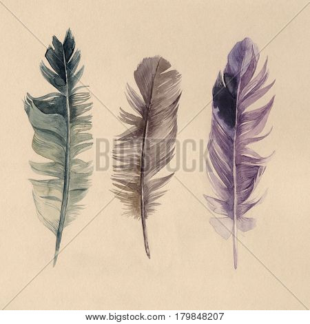 3 hand drawn watercolor feathers in vintage style
