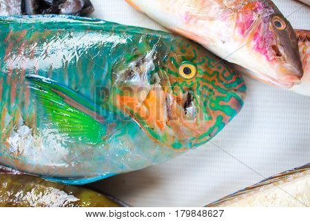 Tropical fish on market. Parrot fish on white background. Seaside fisherman catch. Raw fish meat. Colorful parrot fish ready for cook. Fresh healthy seafood image for cooking recipe book