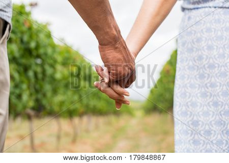 Closeup of loving couple holding hands and walking trought the vineyard. Happy lovers couple holding hands in spring. Mature couple in love walking in the summer park holding hands.