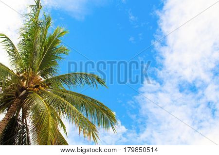 Palm tree and blue sky with white clouds. Relaxing tropical island view to blue sky and sun. Green coco palm tree leaves. Summer travel to exotic place. Vacation travel banner template with text place