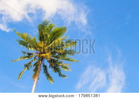 Fresh green palm tree and bright blue sky. Tropical nature holiday photo for banner background. Coco palm top view. Skyscape with coconut palm tree. Exotic island vacation day. Green palm leaf