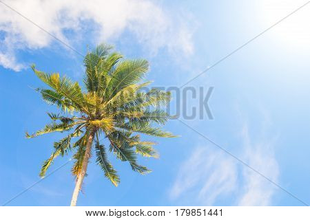 Palm tree and blue sky. Tropical nature idyllic photo for luxury travel banner background. Single coco palm top view. Skyscape with coconut palm tree. Exotic island vacation day. Green palm leaf