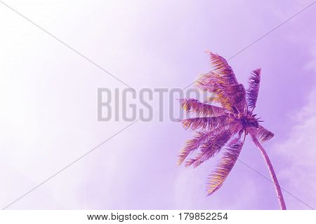 Coco palm tree on sky background. Sunny day on tropical island. Summer vacation banner template. Fluffy palm tree with green leaves. Coconut palms under sunlight. Exotic nature pink toned photo