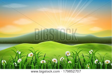 Vector Mountain landscape background with daisies flower
