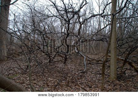 tree branches fallen in the woods in winter in a rainstorm