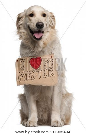 Golden Retriever, 2 years old, sitting in front of white background with sign
