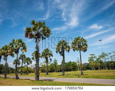 Tropical scene Plam tree leaves on bright blue sky