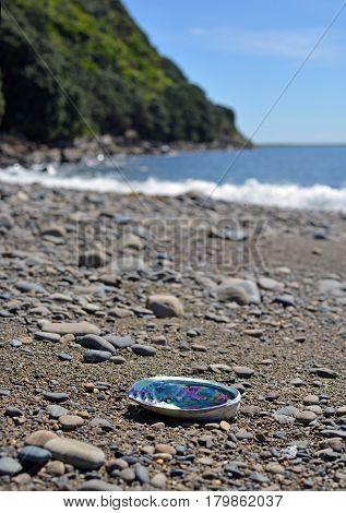 Paua (Abalone) shell washed up on the Kapiti Island Beach.