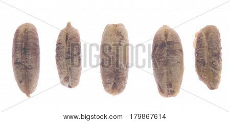 date bones isolated on a white background