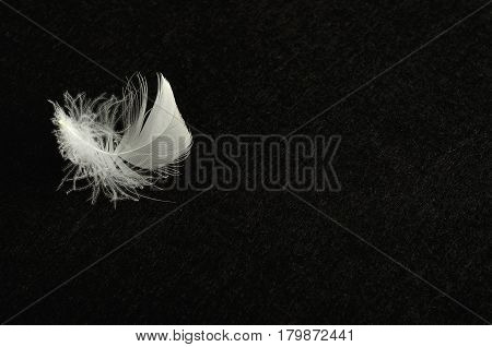 A white fluffy feather displayed on a colorful background