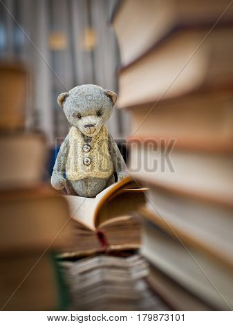 teddy bear teddy reading a book in the library