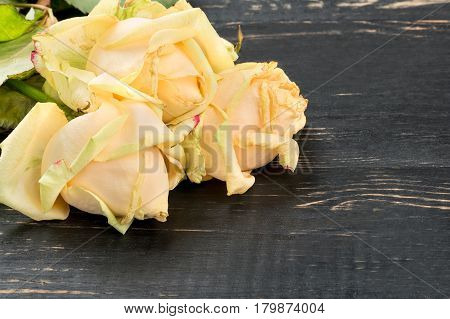 Three sluggish yellow rose on a wooden background, closeup
