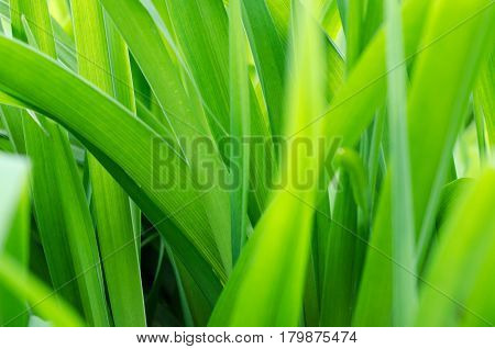 blurred background with fresh green grass on a field