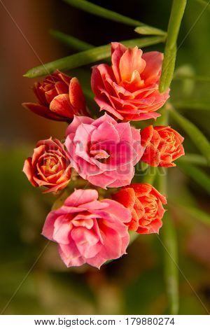 Beautiful And Pink Red Room Flowers