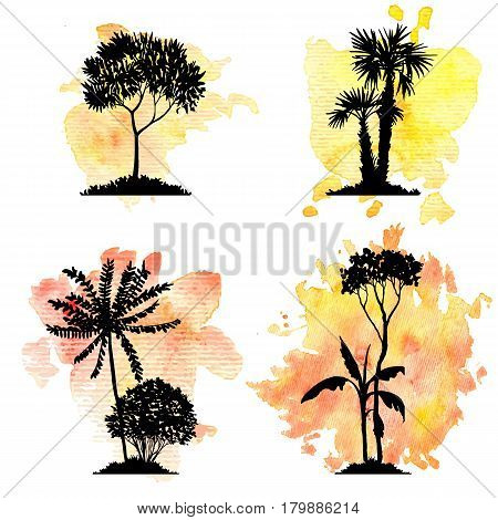 vector set of deciduous exotic trees, palms at watercolor background, hand drawn isolated natural elements