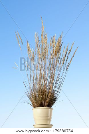 Potted Grass Tussock