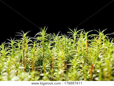Wet Mossy Marsh