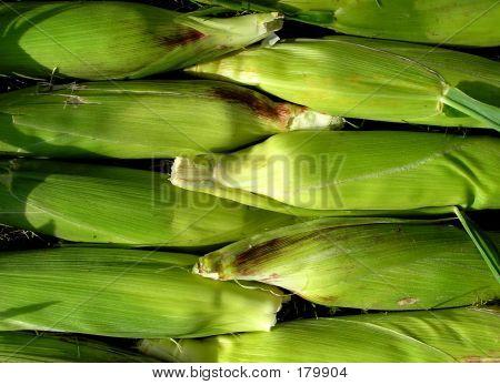 Corn Stalk Background