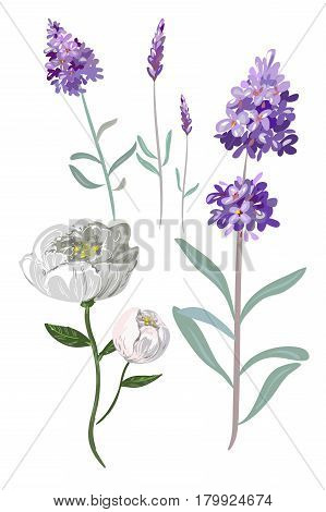 colorful hand drawn flowers vector illustration stock art