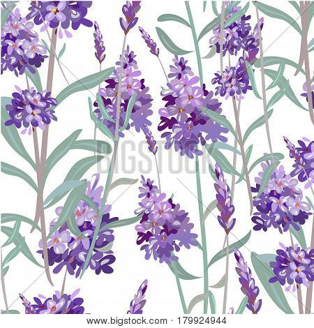 Seamless pattern with hand drawn floral elements in engraving style fragrant lavender. Vector illustration.