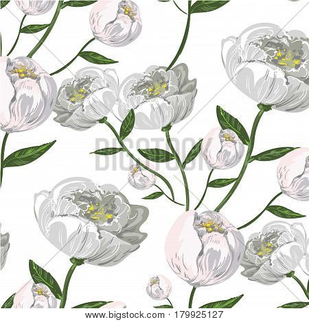 Peony seamless pattern stock vector illustration hand drawn