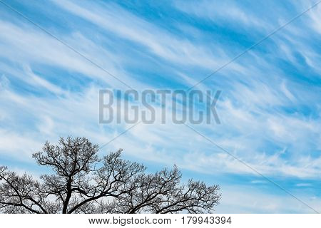 Silhouette of leafless tree against blue sky in spring.