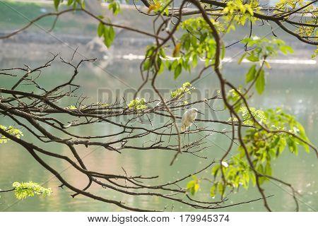 Little egret or Egretta garzetta perching on branch of tree