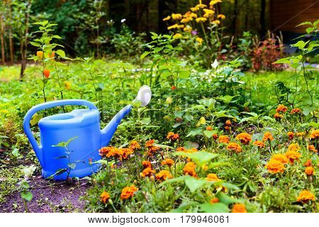 Blue watering can in the summer garden