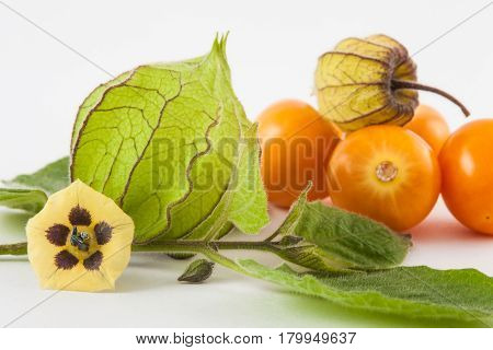 Cape gooseberry fruit, flower and calyx (Physalis peruviana) on white background