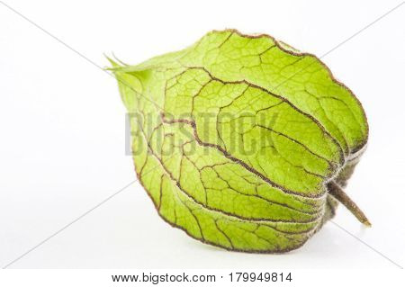 Cape gooseberry calyx  (Physalis peruviana) on white background