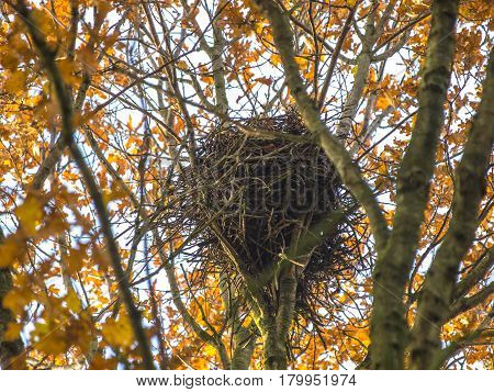 Autumnal Colored bird Nest in a Tree