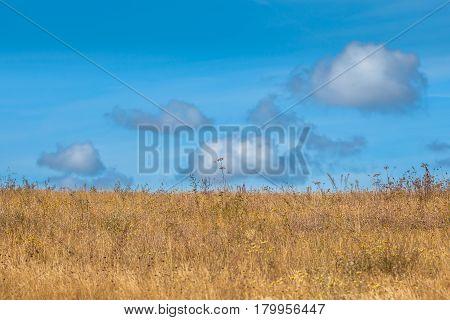 Summer Grassland Background