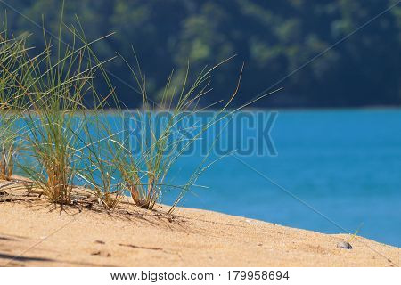 Brightly Colored Dune Grass
