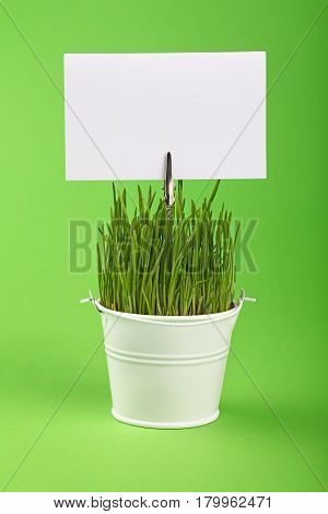 Spring Grass And Sign In Bucket Over Green
