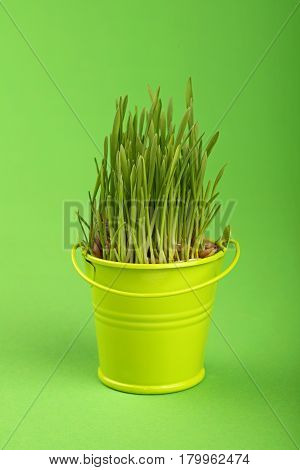 Spring Grass Growing In Small Bucket Over Green