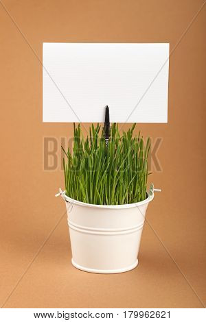 Spring Green Grass And Sign In Bucket Over Brown