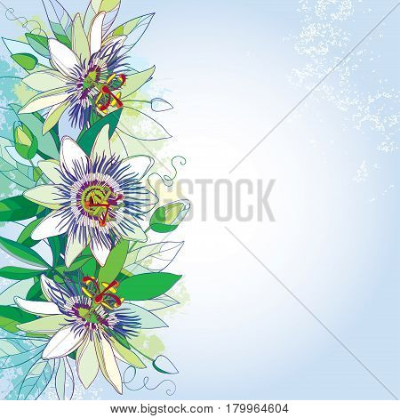 Vector bouquet with outline tropical Passiflora or Passion flowers, bud and foliage on the pastel  background. Greeting card with ornate floral elements in contour style for exotic summer design.