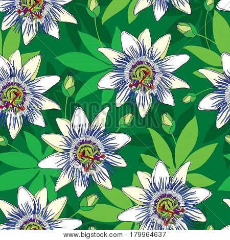 Vector seamless pattern with outline tropical Passiflora or Passion flowers in blue and white, bud and leaves on the green background. Floral background in contour style for exotic summer design.