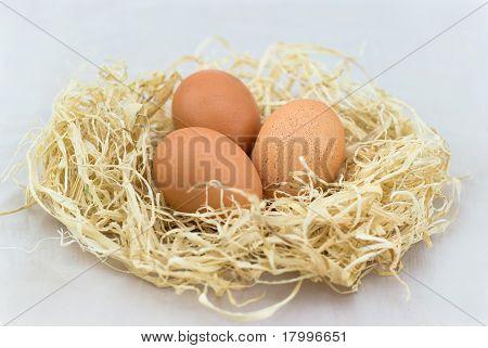 im Nest Ei