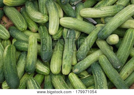 Cucumber - rather popular vegetable in our house