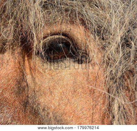Beautiful brown horse eye, head with mane closeup