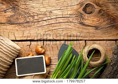 Gardening tools with twine and bulbs on wood background. Top view