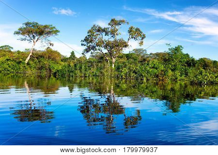 Beautiful reflection of the Amazon Rainforest in Brazil